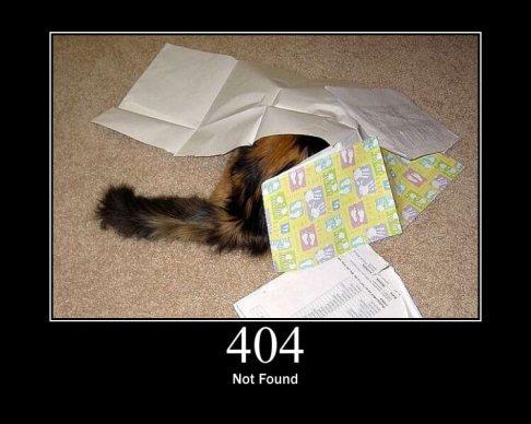 404cat